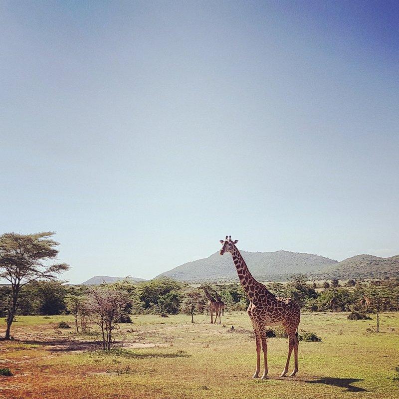 Národní park Masai Mara