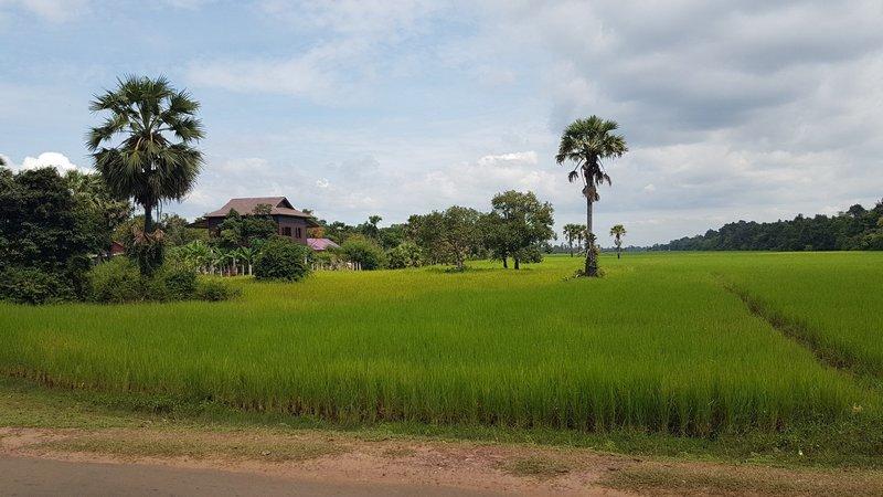 Angkor Wat countryside, Cambodia